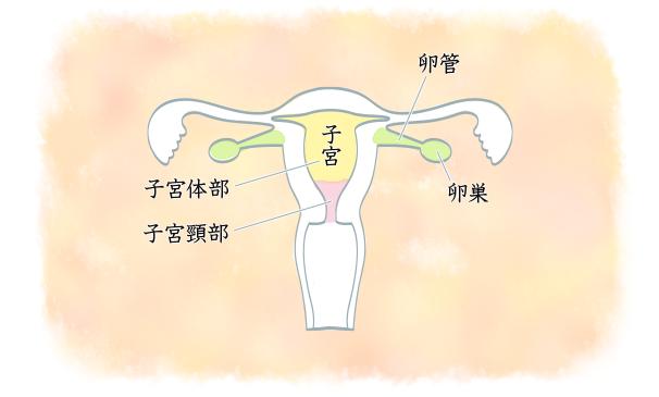 癌 検診 宮頸 子